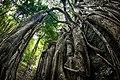 (Khao Luang) Ramkhamhaeng National Park 05.jpg