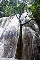 Árvore na cachoeira do rio Salobra.jpg