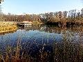 Étang forestier du bois des mouilles, réserve biologique forestière de Bernex - panoramio.jpg