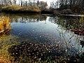 Étang forestier du bois des mouilles, réserve biologique forestière de Bernex - panoramio (3).jpg