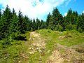 Šumiac - chodník na Kráľovu hoľu - panoramio.jpg