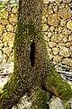 Πεταλούδες σε κορμό δέντρου.jpg