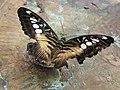 Бабочка на выставке НБС 6.jpg