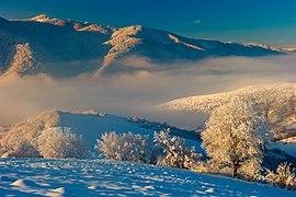 Білий ліс.jpg