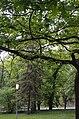 Біогрупа у сквері Васильєва. Фото 2.jpg