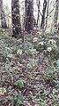 Вторая безымянная могила. вместо креста палка с георгиевской лентой.jpg