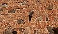 Г.п. Мір - Мірскі замак, галава барана PICT1699.jpg