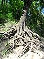 Дерево..JPG