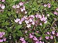 Донецкий ботанический сад 033.jpg
