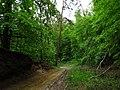 Дорога на северном склоне горы Казачья.jpg