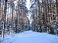 Зимняя дорога - panoramio (7).jpg