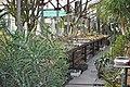 Кактусова оранжерея.jpg