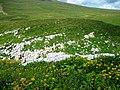 Каменное море, Кавказский заповедник.jpg