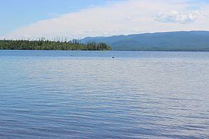 Azas Nature Reserve - Azas lake's birds