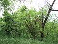 Парк шума Гази Баба во мај (163).JPG