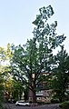 Партизанський дуб,DSC 0162 stitch.jpg