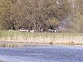 Пикник на противоположном берегу - panoramio.jpg