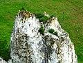 Полин солянковидний(Artemisia salsoloides) на скелі.jpg