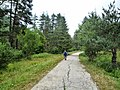 Пътя от х.Вада - panoramio (1).jpg