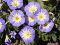 Растения в Седово 034.JPG