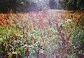 Растительный мир Национального парка Зюраткуль.jpg