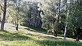 Талалаївсський парк.jpg