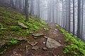 Туманний ліс.jpg