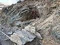 تفتت الصخور بواسطة الجذور النبايتة.jpg
