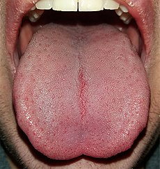 cuidados de la lengua humana