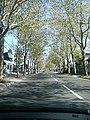 並木道 (avenue) - panoramio.jpg