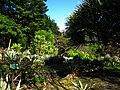 台北植物園多肉區 Succulent Area in Taipei Botanical Garden - panoramio.jpg