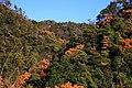 愛知県犬山市継鹿尾杉ノ段 - panoramio.jpg