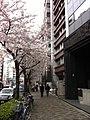 明治通り、広尾の桜 - panoramio.jpg