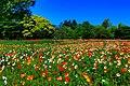 昭和記念公園 - panoramio (1).jpg
