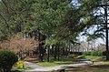 食とみどり技術センター 緑化樹見本園 2014.4.02 - panoramio.jpg
