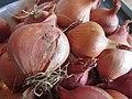 -2019-11-03 Harvest of shallots (Allium cepa) for pickling, Trimingham (2).JPG