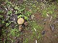 ... mushroom (5872352160).jpg