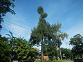 03129jfEspana Boulevard Landmarks Barangays Lacson Sampaloc Manilafvf 10.jpg