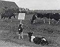 08-11-1952 10882 Onteigening van grond (4098063146).jpg