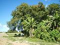 09676jfLandscapes Grasslands Plaridel Bypass Road Bonga Menor Bustos Bulacan Villagesfvf 02.JPG