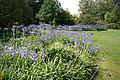 0 Kalmthout - Arboretum 110801 (2a).JPG