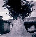 1-Algarra-santerón-paisajeRural (ca.1960).jpg