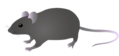 201108 mouse.png
