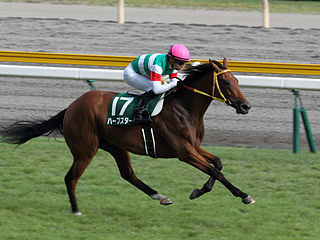 Harp Star Japanese-bred Thoroughbred racehorse