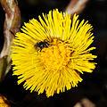 2014-03-10 12-42-49 insecte-fleur.jpg