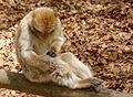 2016-04-21 14-23-10 montagne-des-singes.jpg