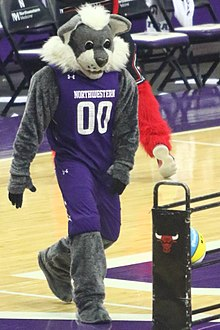 20180206 UM-NW Willie the Wildcat 7DM27187.jpg