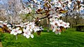 2018 Titan Park Spring (1).jpg