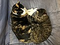2020-03-09 07 31 30 A tabby cat and a calico cat cuddling on a bed in the Franklin Farm section of Oak Hill, Fairfax County, Virginia.jpg