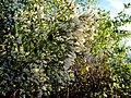 25 Flower Bennetts Point RD Green Pond SC 6852 (12397528715).jpg